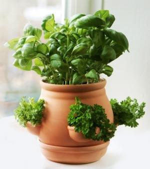 Terrakotta & Keramik für Heim, Küche, Garten, Balkon und Terrasse - Page 9